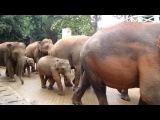 слоны идут купаться ))))